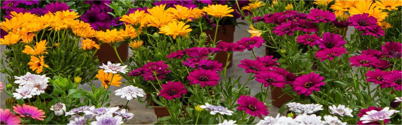 entretien jardin valence d'agen